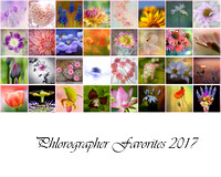 Slideshow Cover Phlorography Favorites 2017-1