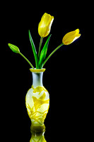 Tulip Yellow Brighter-1474
