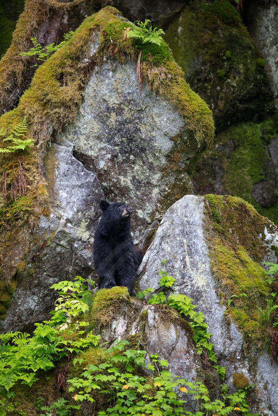 Tall Rocks and Bear