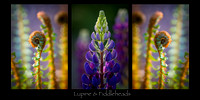 Christy Lupine & Fiddleheads