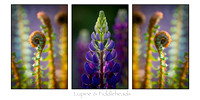 Christy Lupine & Fiddleheads on White