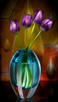 TULIPS | WINTER COLLECTION